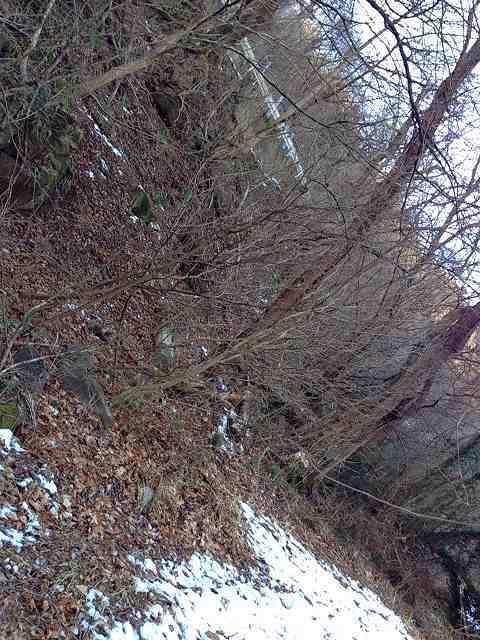 この斜面を登った.jpg