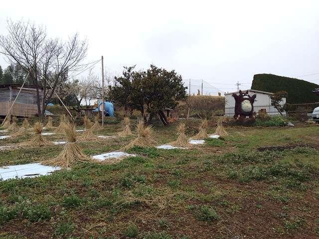 トトロ果樹園と畑.jpg