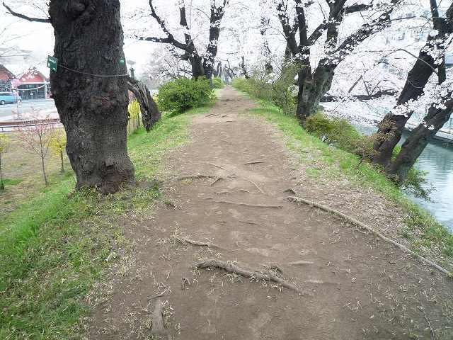 土塁の桜道.jpg