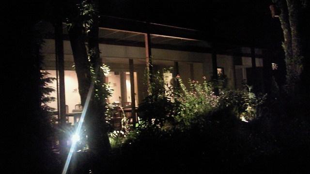 夜のさらの木2.jpg
