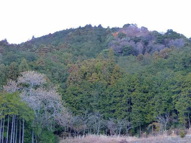 大森山1.jpg