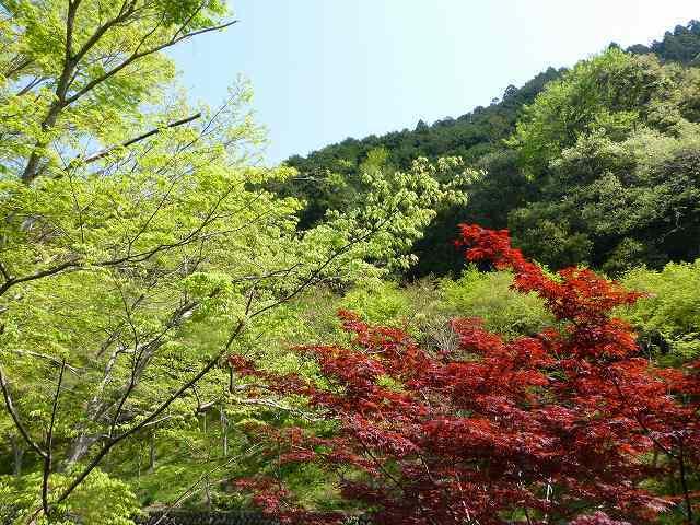 杉尾山(仮称).jpg