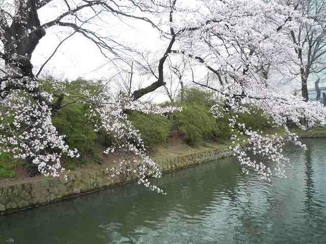 桜とお掘3.jpg