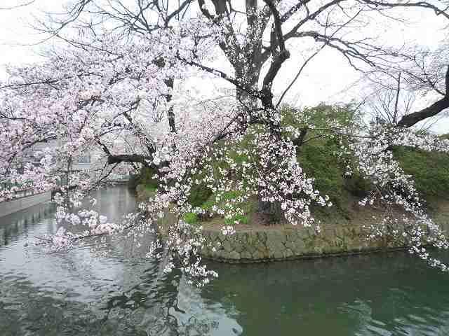 桜とお掘4.jpg