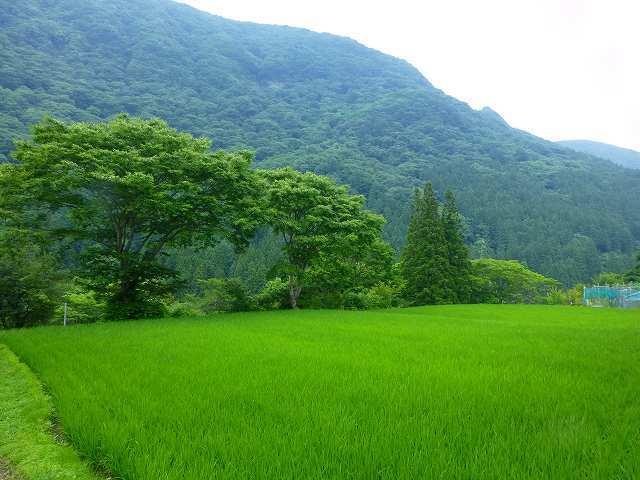 水田と又見山.jpg
