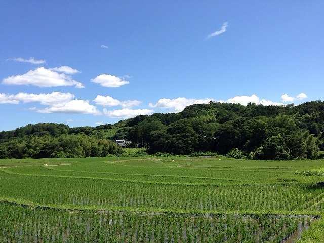 田園風景1.jpg