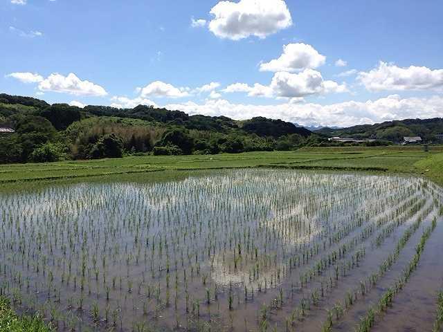 田園風景2.jpg