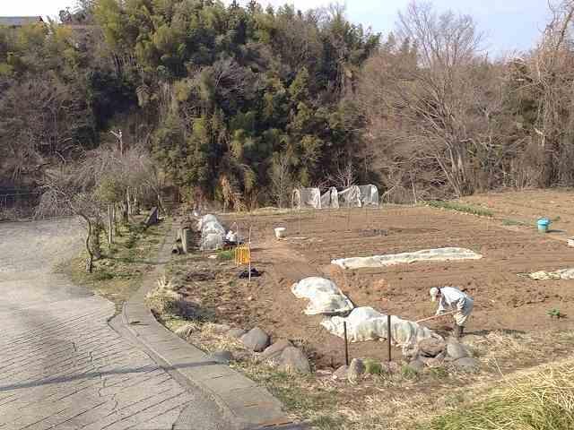 畑のオジさん.jpg