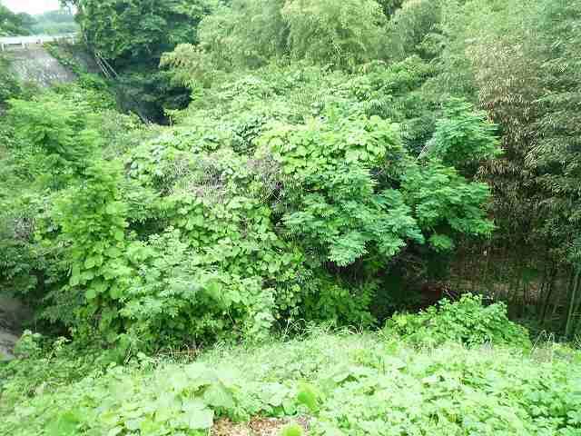 自然の堀.jpg