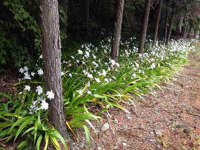 路傍の花.jpg