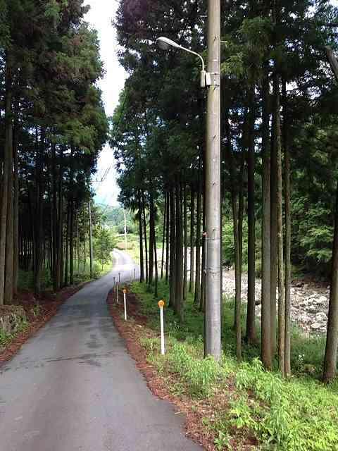 鉈取林道2.jpg